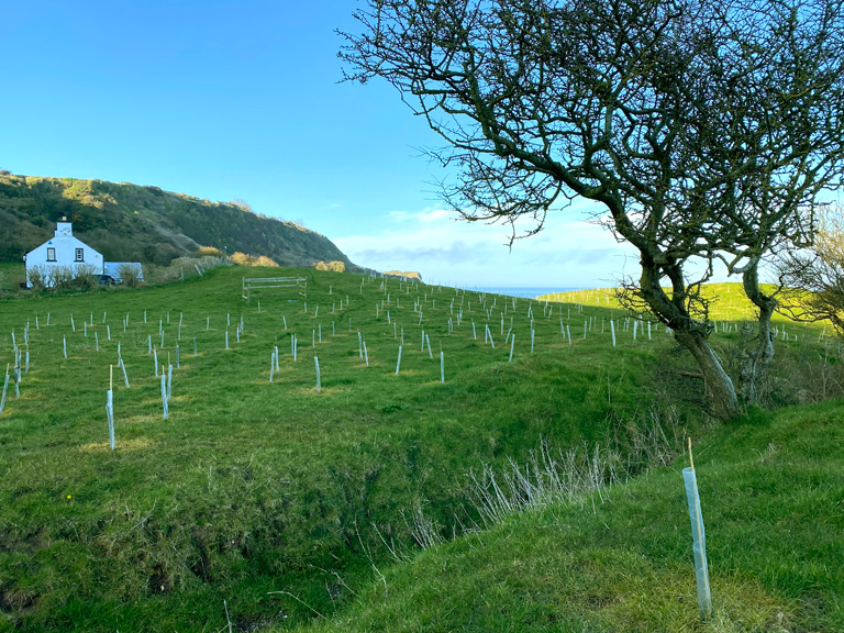 Northern Ireland Tree Supply Issues For 2021/22 Planting Season